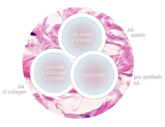 Sunekos formula has been proved by studies to be able to stimulate the fibroblasts of the dermis reproducing both collagen and elastin, key elements for ECM regeneration.